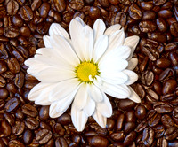 Flowers&CoffeeBeans_0396
