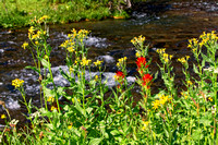 Fall Creek & Wildflowers